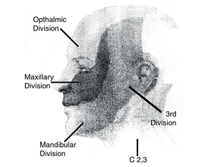PHN Face and Scalp
